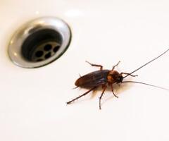 cockroach-nj