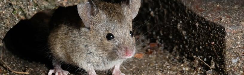 mice-web-banner