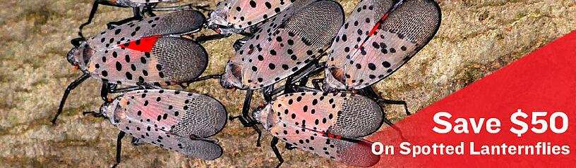 save-on-spotted-lanternfly