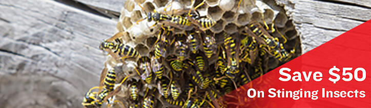 save-on-stinging-insect-banner